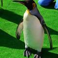 20141129 長崎ペンギン水族館19