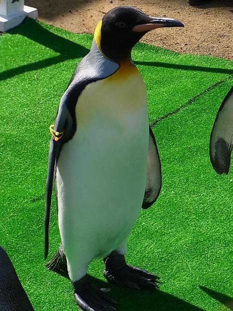 Photos: 20141129 長崎ペンギン水族館20
