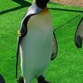 20141129 長崎ペンギン水族館20