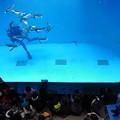 20150103 長崎ペンギン水族館 15
