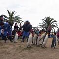 20150103 長崎ペンギン水族館 21