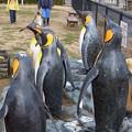 20150103 長崎ペンギン水族館 27