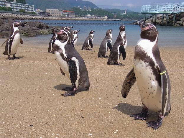 20170415 長崎ペンギン水族館 23