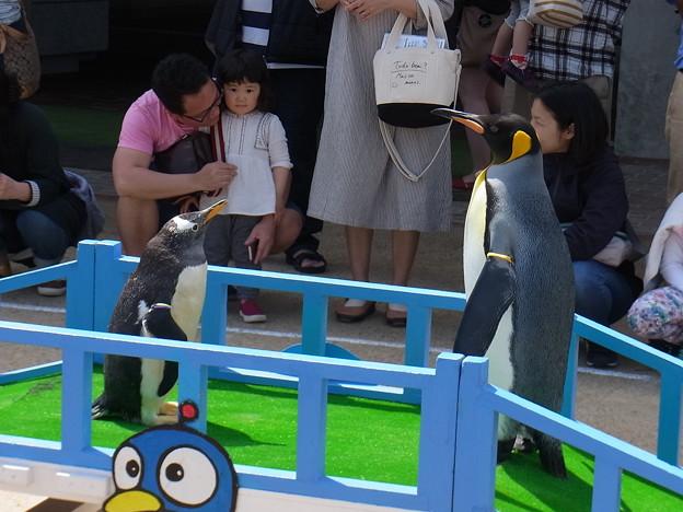 20170415 長崎ペンギン水族館 30
