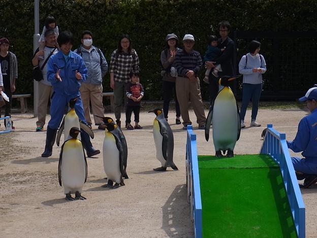 20170415 長崎ペンギン水族館 33