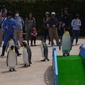 Photos: 20170415 長崎ペンギン水族館 33