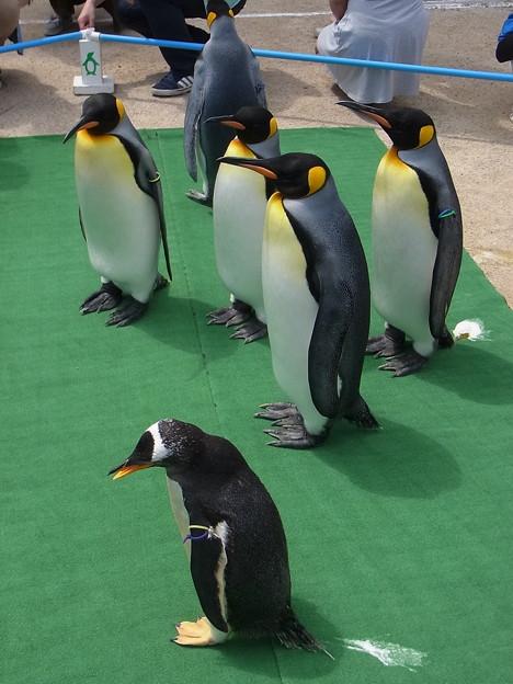 20170415 長崎ペンギン水族館 37