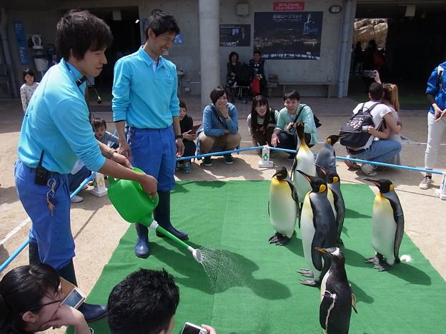 20170415 長崎ペンギン水族館 38