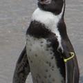 20170923 長崎ペンギン水族館12
