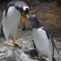 写真: 20170923 長崎ペンギン水族館14