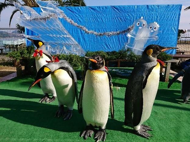 20171223 長崎ペンギン水族館07