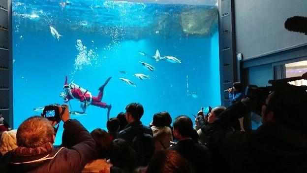 20171223 長崎ペンギン水族館09