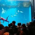 Photos: 20171223 長崎ペンギン水族館09