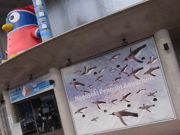 20171223 長崎ペンギン水族館20