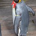 20171223 長崎ペンギン水族館24