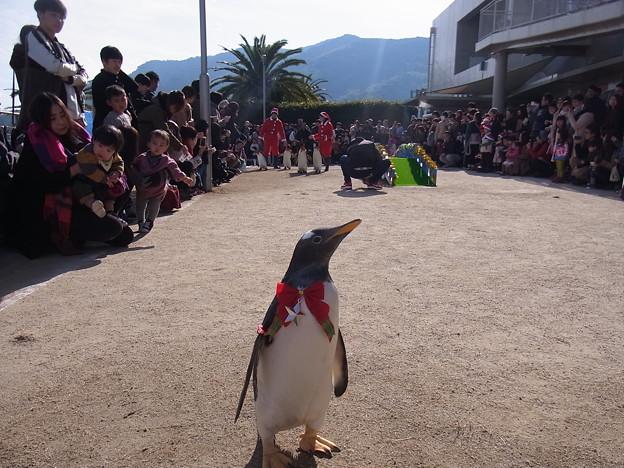 Photos: 20171223 長崎ペンギン水族館26