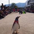 20171223 長崎ペンギン水族館26
