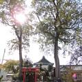 お寺・神社に大木。