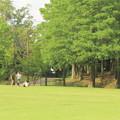 写真: 小暑・深緑の公園で