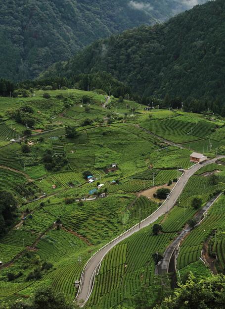 天空の茶畑;上ケ流