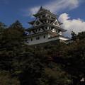 Photos: 山城・郡上八幡城