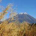 Photos: すすき越しの富士山