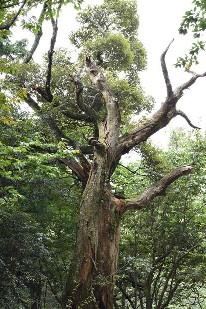 存在感のある木