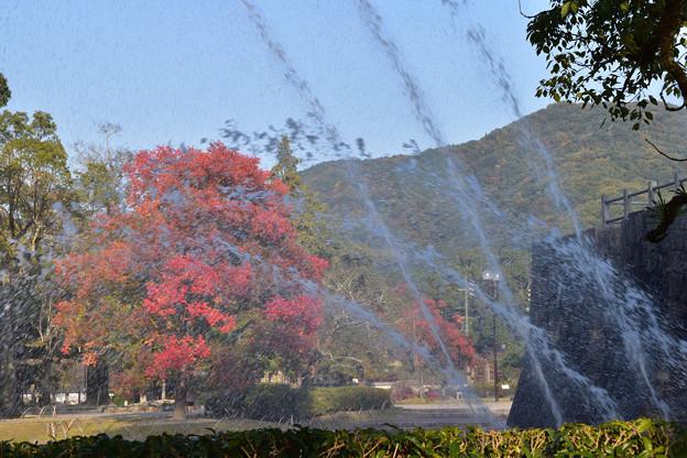写真: 噴水とカイノキ
