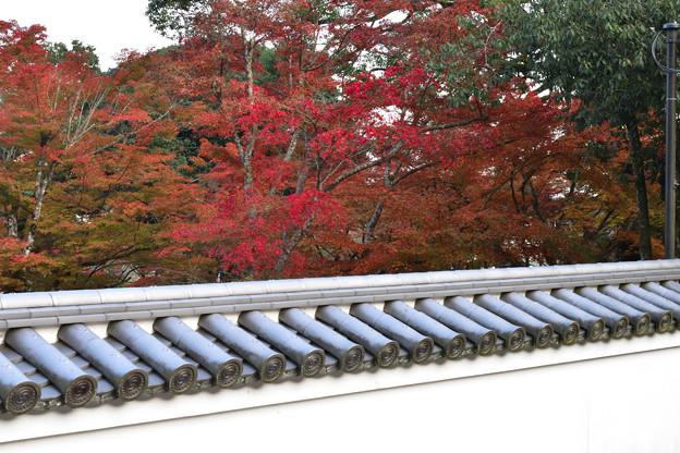 写真: 洞泉寺の塀