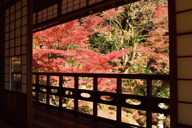 楽山荘庭園の紅葉 1