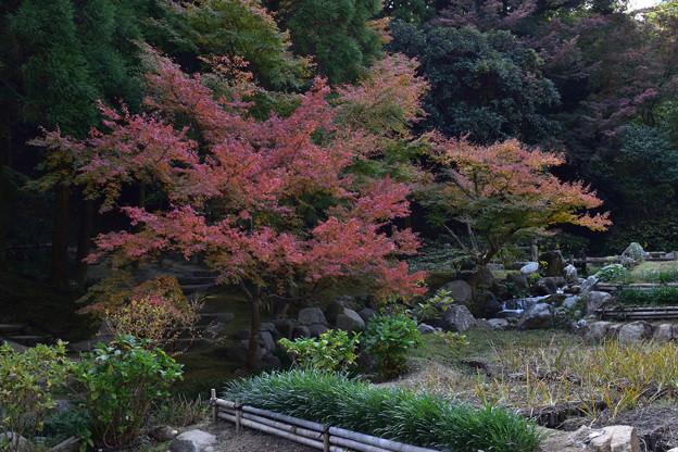 長府庭園紅葉 11