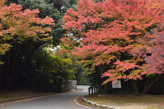 毛利氏庭園の紅葉 1