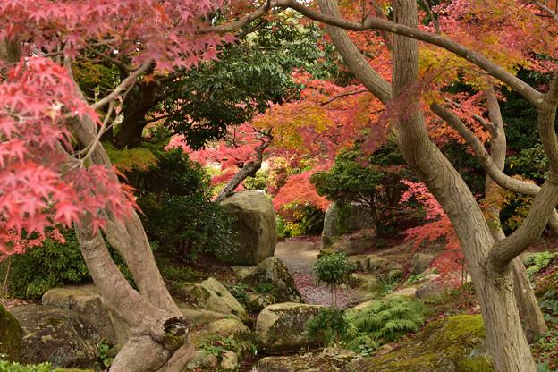 毛利氏庭園の紅葉 11