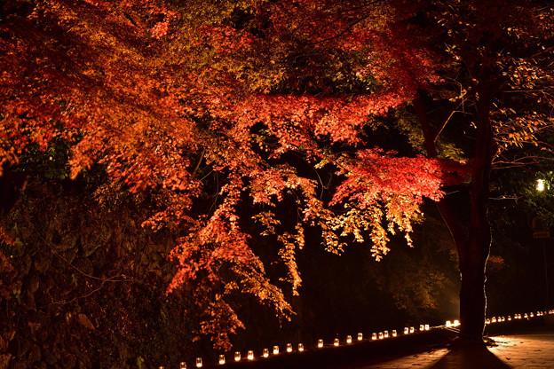 壇具川沿いの紅葉