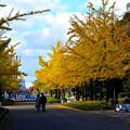 写真: 過ぎ行く秋