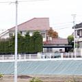 Photos: 向日葵と烏