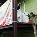 Photos: 看板猫?