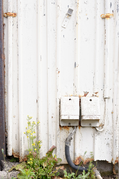 Photos: 白壁に