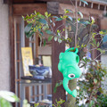 Photos: 蕎麦屋の象