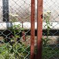 写真: フェンスと