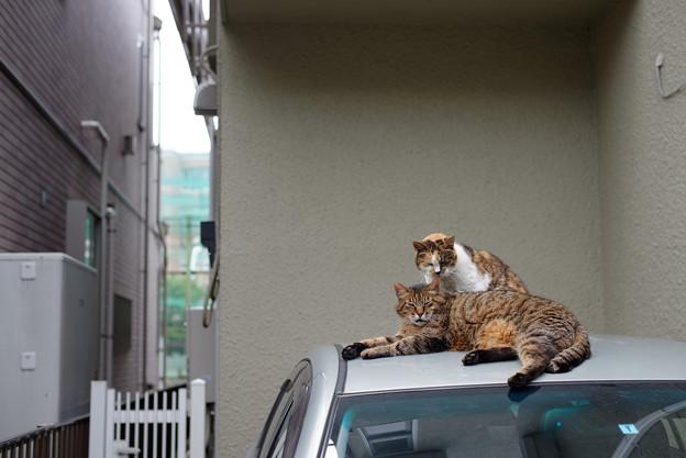 Photos: 屋根の猫