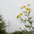 写真: 鉄塔と花