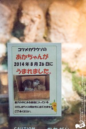 higashiyama141025002