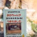 Photos: higashiyama141025002