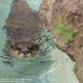Photos: alohagarden140915170