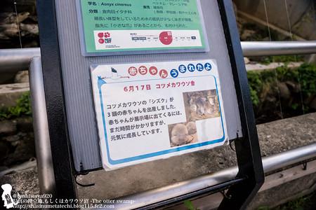 chikouzan170812001