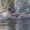 Photos: fukushima171113545