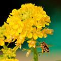 Photos: 一時の春・・3   0212