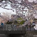 写真: 桜風景