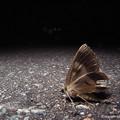 写真: yamanao999_insect2017_253